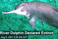 River Dolphin Declared Extinct