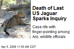 Death of Last US Jaguar Sparks Inquiry