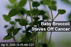 Baby Broccoli Staves Off Cancer