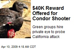$40K Reward Offered for Condor Shooter