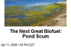The Next Great Biofuel: Pond Scum