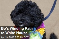 Bo's Winding Path to White House