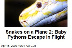 Snakes on a Plane 2: Baby Pythons Escape in Flight