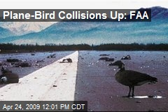 Plane-Bird Collisions Up: FAA