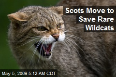 Scots Move to Save Rare Wildcats