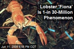 Lobster 'Fiona' Is 1-in 30-Million Phenomenon