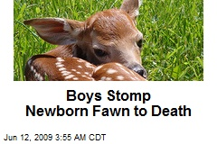 Boys Stomp Newborn Fawn to Death