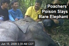 Poachers' Poison Slays Rare Elephant