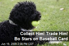 Collect Him! Trade Him! Bo Stars on Baseball Card