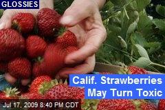 Calif. Strawberries May Turn Toxic