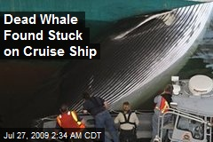 Dead Whale Found Stuck on Cruise Ship