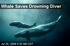 Whale Saves Drowning Diver
