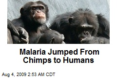 Malaria Jumped From Chimps to Humans