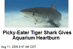 Picky-Eater Tiger Shark Gives Aquarium Heartburn