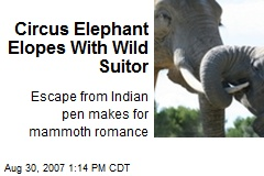 Circus Elephant Elopes With Wild Suitor