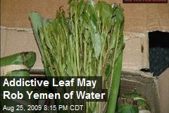 Addictive Leaf May Rob Yemen of Water