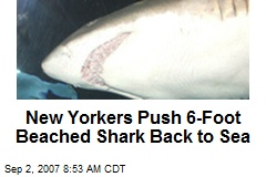 New Yorkers Push 6-Foot Beached Shark Back to Sea