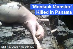 'Montauk Monster' Killed in Panama