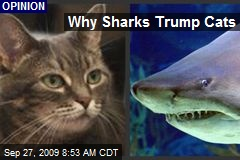 Why Sharks Trump Cats