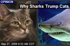 Why Sharks Trump Cats