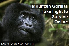 Mountain Gorillas Take Fight to Survive Online