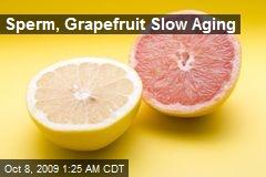 Sperm, Grapefruit Slow Aging
