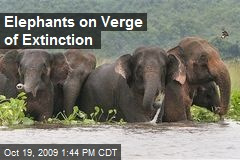 Elephants on Verge of Extinction