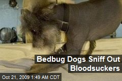 Bedbug Dogs Sniff Out Bloodsuckers