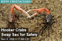Hooker Crabs Swap Sex for Safety