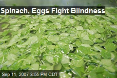 Spinach, Eggs Fight Blindness
