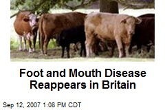 Foot and Mouth Disease Reappears in Britain