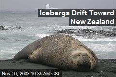 Icebergs Drift Toward New Zealand