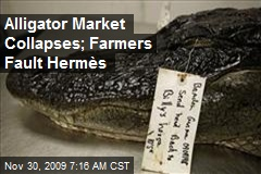 Alligator Market Collapses; Farmers Fault Hermès
