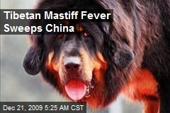 Tibetan Mastiff Fever Sweeps China