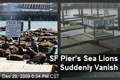 SF Pier's Sea Lions Suddenly Vanish