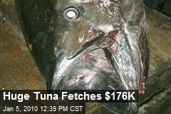 Huge Tuna Fetches $176K