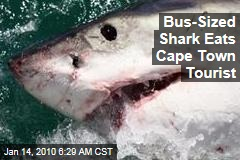 Bus-Sized Shark Eats Cape Town Tourist