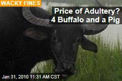 Price of Adultery? 4 Buffalo and a Pig