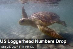 US Loggerhead Numbers Drop