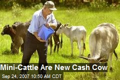 Mini-Cattle Are New Cash Cow