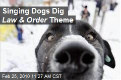 Singing Dogs Dig Law & Order Theme