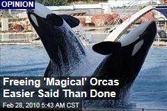 Freeing 'Magical' Orcas Easier Said Than Done