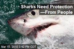 Sharks Need Protection —From People