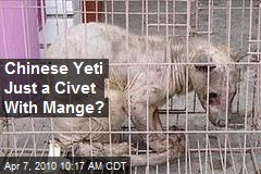 Chinese Yeti Just a Civet With Mange?