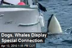Dogs, Whales Display Special Connection