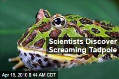 Scientists Discover Screaming Tadpole