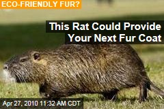 This Rat Could Provide Your Next Fur Coat