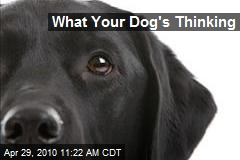 What Your Dog's Thinking
