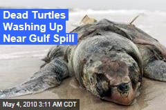Dead Turtles Washing Up Near Gulf Spill