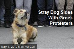 Stray Dog Sides With Greek Protesters